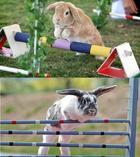 Поразительные факты о животных, которые вы наверняка не знали