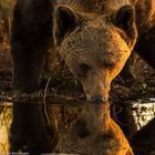Животный мир Скандинавии в фотографиях