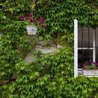 Способ не пускать насекомых в дом при открытых настежь окнах