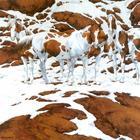 Сколько лошадей вы видите на этом изображении? Ответ вас удивит
