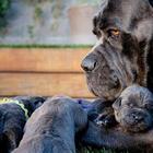 Собаки, которые знают, что такое семья