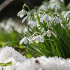 8 красивых растений, цветущих в марте
