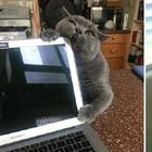 Несколько счастливых котов
