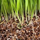 Что такое вермикулит и как его правильно использовать