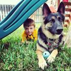 Крепкая дружба детей и собак