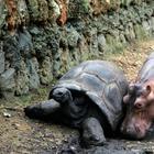 Доказательства того, что чужих детей не бывает даже у животных