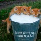 Самые смешные кошки: лучшая подборка картинок и фото