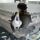 25 раз, когда животные вели себя как полные придурки