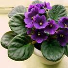 Домашние растения, которые быстро принесут вам счастье и благополучие