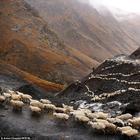 Захватывающее приключение в Грузии: перегон стада овец через перевал Абано