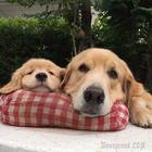 Cмешные и трогательные фото животных, которые помогут вам пережить серые будни