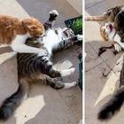 Котики, из-за чьих проделок хозяева сначала пускают слезу, а потом готовы лопнуть от смеха
