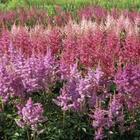 Какие цветущие многолетники нужно делить и пересаживать осенью