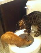 17 котиков, которые потерпели фиаско и прославились на весь Интернет