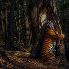 Зрелищные работы победителей конкурса на лучшую фотографию дикой природы 2020 года