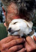 Сильные фотографии бездомных и их собак