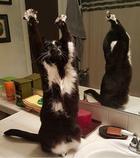 Кошачьи странности: Милейшие коты, которые ставят в тупик своим поведением