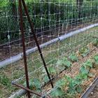 4 способа выращивания огурцов на маленьком участке