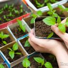 Сажаем грядки с умом: лучшие комбинации растений для минимального ухода
