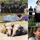 Несколько очевидных доказательств того, что у животных есть душа
