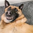 Победители конкурса Comedy Pet Photo Awards 2020