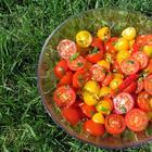 Быстрые маринованные помидоры в итальянском стиле
