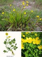 11 страшно ядовитых растений, о которых необходимо знать каждому