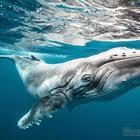 30 величественных фотографий китов