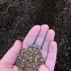 Как правильно сажать укроп семенами и рассадой в открытый грунт, сроки посадки