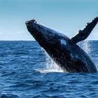 10 странных фактов, связанных с глубинами океана