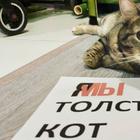 Кот Виктор, который смог: россиянин обманул авиакомпанию и провез в салоне слишком толстого кота