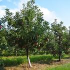Опасное соседство: никогда не сажайте эти деревья и кустарники рядом