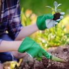 10 вредных садово-огородных мифов, которым мы верим