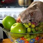 Кошки знающие толк в еде
