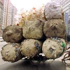 Вся правда про жизнь в Китае из первых рук