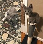 25 животных до и после того, как как их спасли и подарили дом