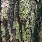 Как правильно побелить осенью деревья в саду
