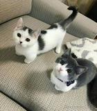20 крошечных котят, которые так и просятся в наши ладошки