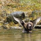 40 самых смешных фото дикой природы, сделанных в 2016 году!