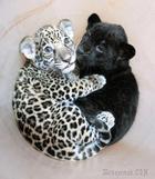 25 детёнышей диких животных, которые оказались милее, чем щеночки и котики