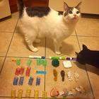 18 котов-воришек, вместе со своими наворованными сокровищами