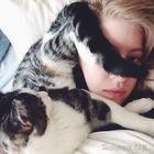 Коты, которые чихать хотели на ваше личное пространство