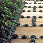 Уникальные садовые дорожки