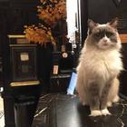 Кошка Матильда ушла на пенсию после многолетней службы в отеле
