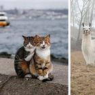 16 животных, которые будто сами попросили, чтобы их сфоткали