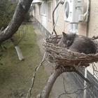 Фото с кошками для поднятия настроения