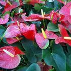 ТОП-50 декоративных растений очищающих воздух в нашем доме или квартире