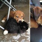 Примеры дружбы между животными, которые растопят ваше сердце