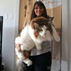19 котов завидной ширины морды и повышенной пушистости всем на зависть