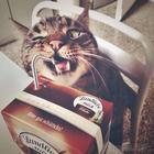 Коты-воришки, пойманные с поличным